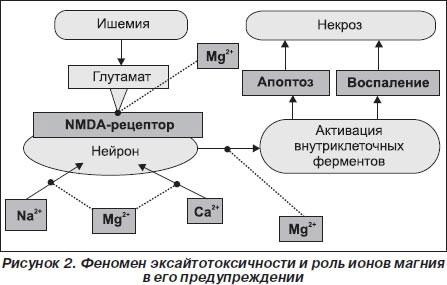 Роль ионов магния