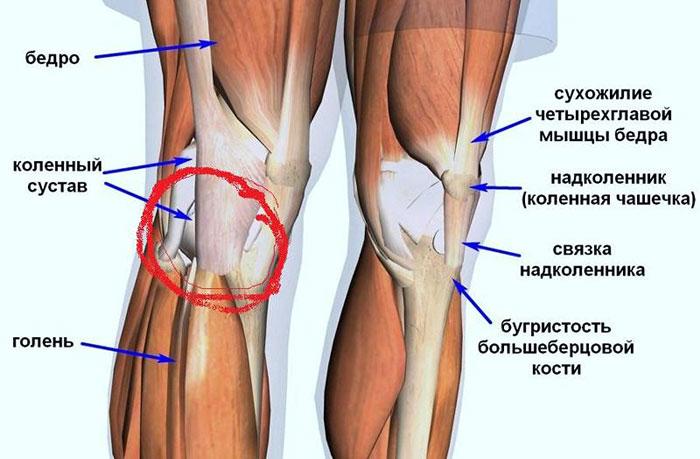 Олимпия воспаления суставов камфорное масло от боли в суставах