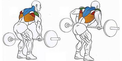 Как правильно делать тягу штанги в наклоне